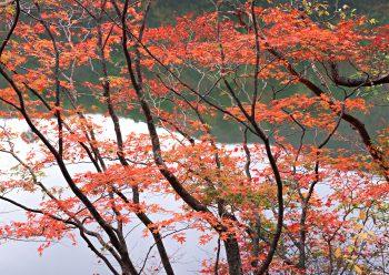 درختان با برگ زرد