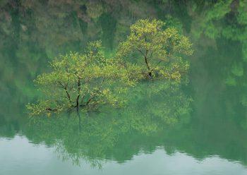 درختچه های داخل آب